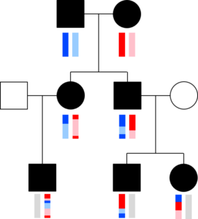 Transmission of colored DNA across three generations
